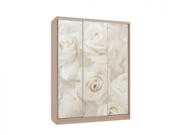 Дуб млечный+Фасады тип 7 Розы